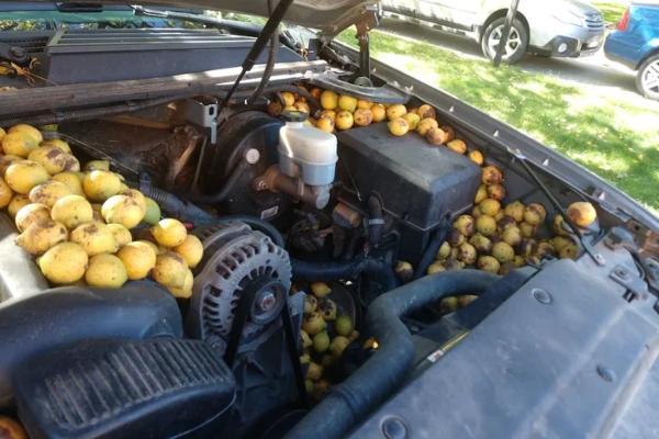 Čudna priča o čovekovom automobilu i vrednoj veverici